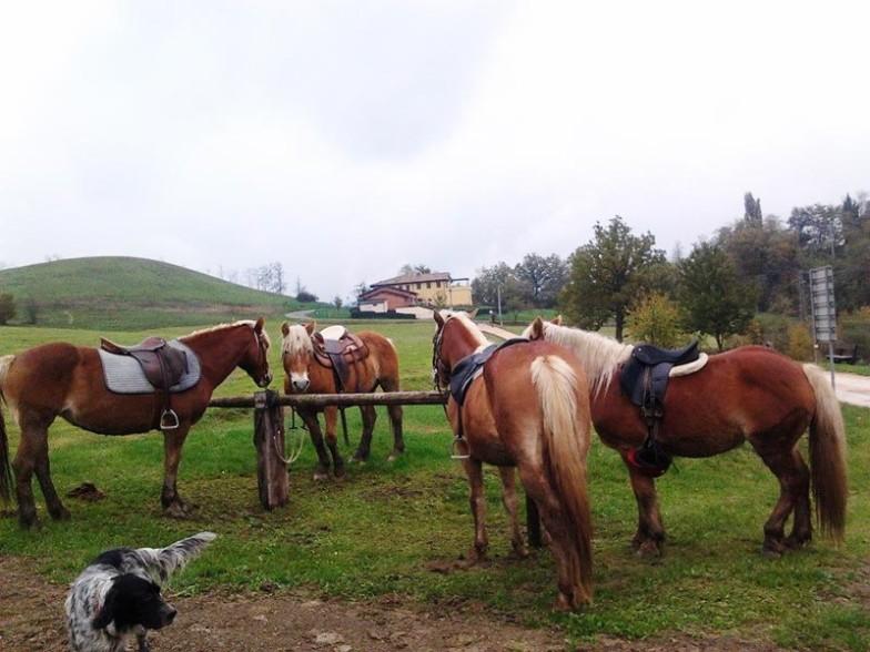Montetermine-vacanze-a-cavallo-gallery-003