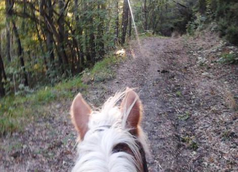 Trekking di Monte Salvaro